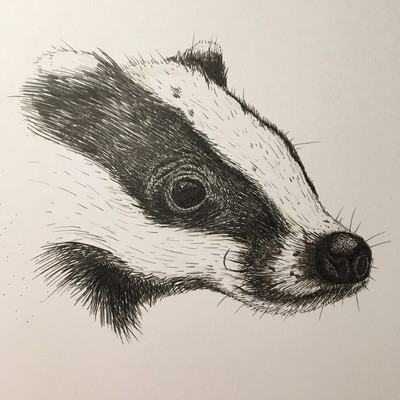 pen drawing of badger