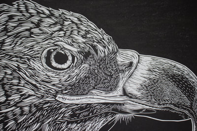 linocut print sea eagle