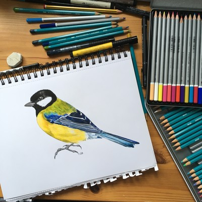 drawing of great tit