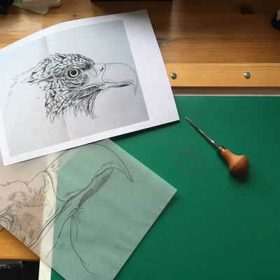 White Tailed Eagle Linocut